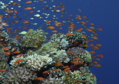 Jewels on the Reef